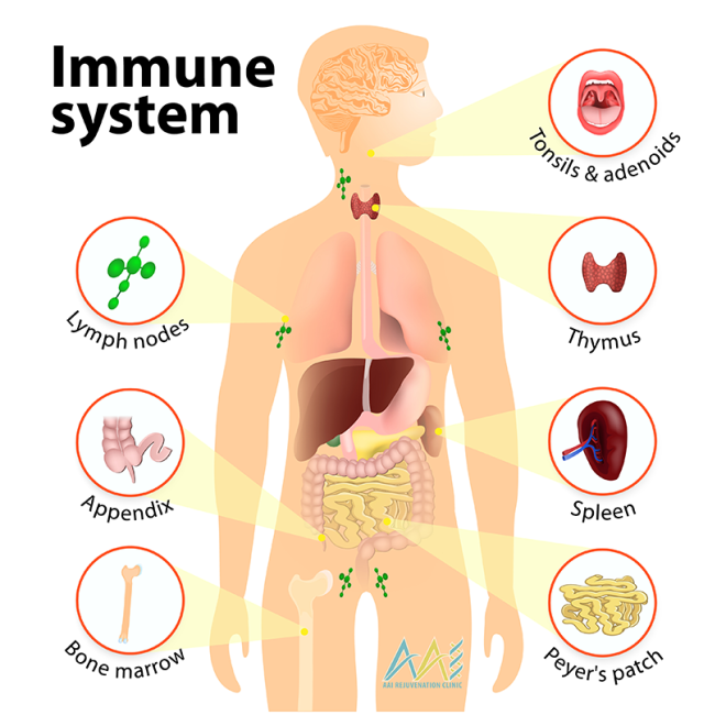 Componants-of-the-Immune-System